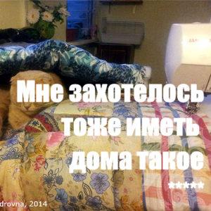 «Мне захотелось тоже иметь дома такое» — Татьяна Александровна (по мотивам моих МК)